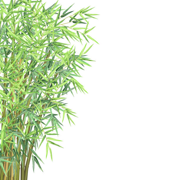 Bamboo branches, vector illustration with copy space. vector art illustration
