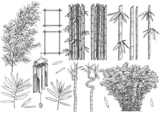 Bamboo Drawing Sketch