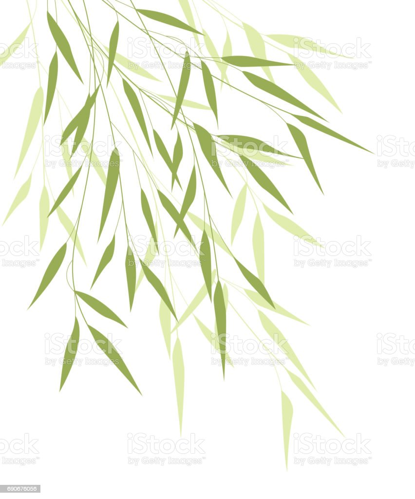 Bamboo green leaves vector art illustration
