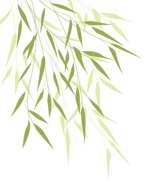 Bamboo green leaves vector art illustration