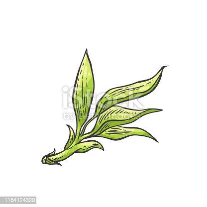 free download of bambu runcing vector graphics and illustrations free download of bambu runcing vector graphics and illustrations