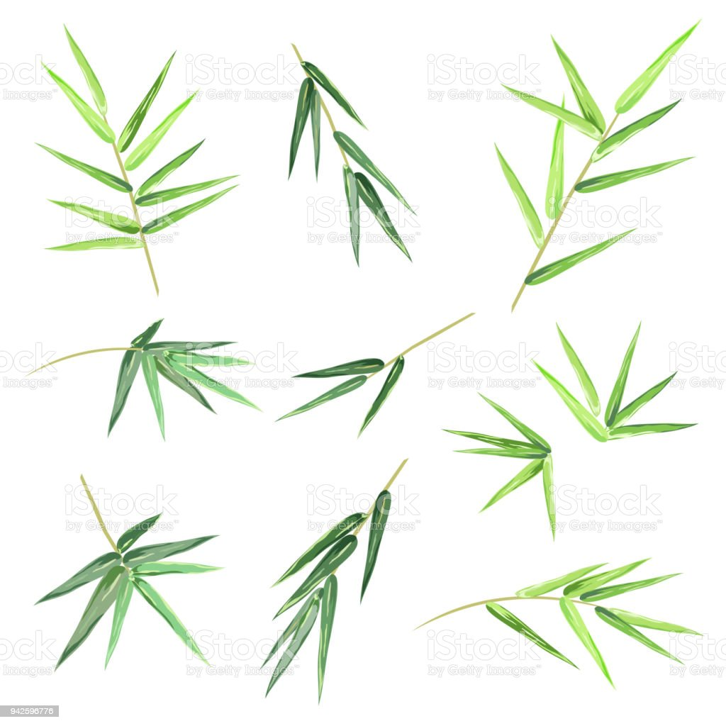 Bamboo leaves, set of vector sketches. vector art illustration