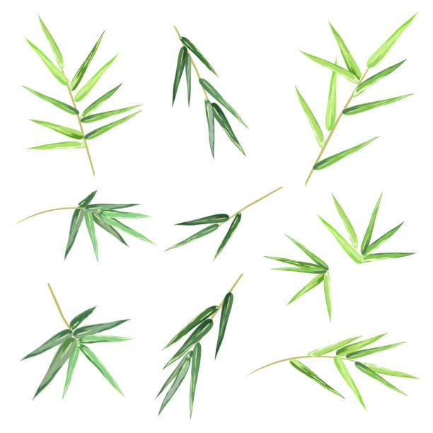 Feuille De Bambou Vectoriels Et Illustrations Libres De