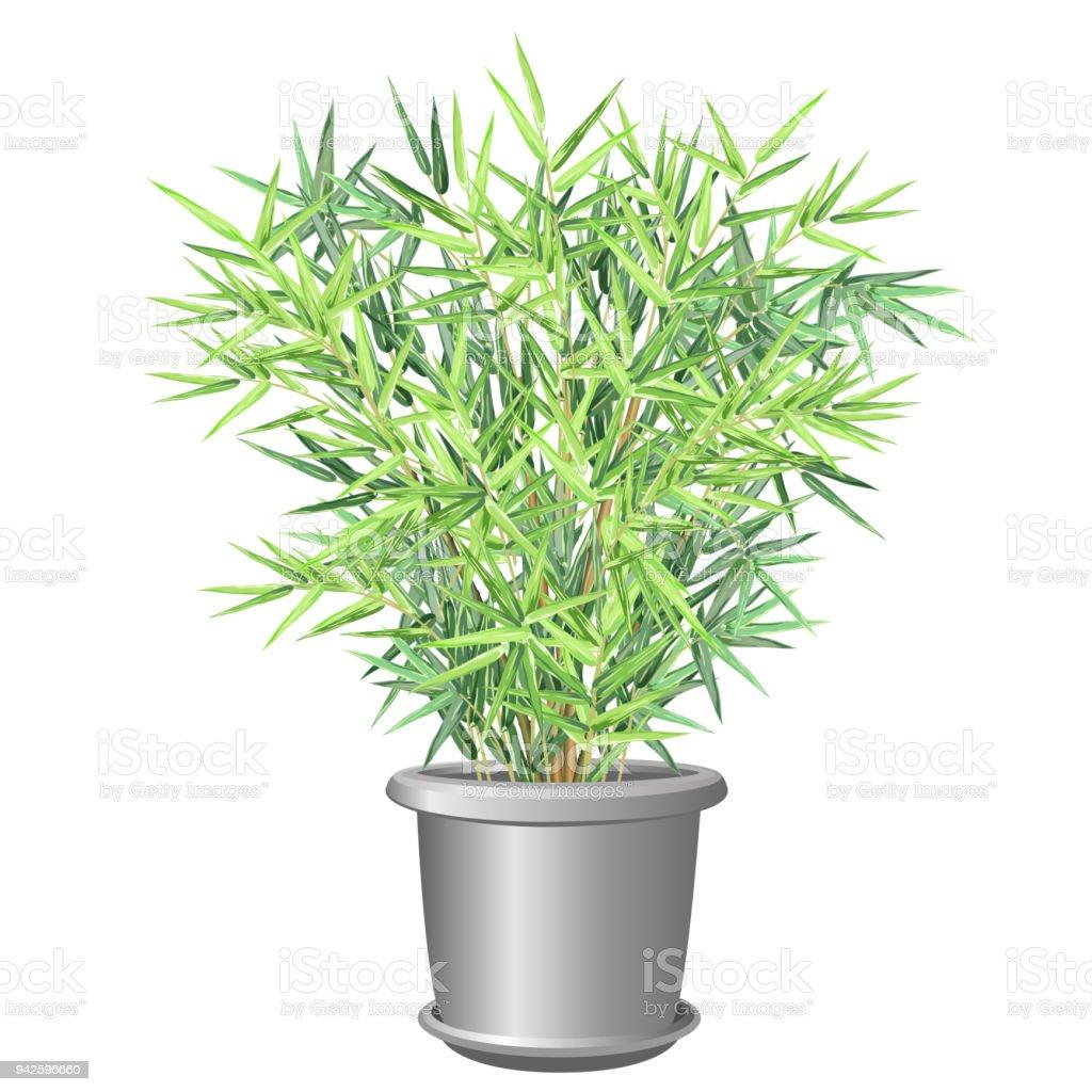 Bamboo plant in pot, vector illustration. vector art illustration