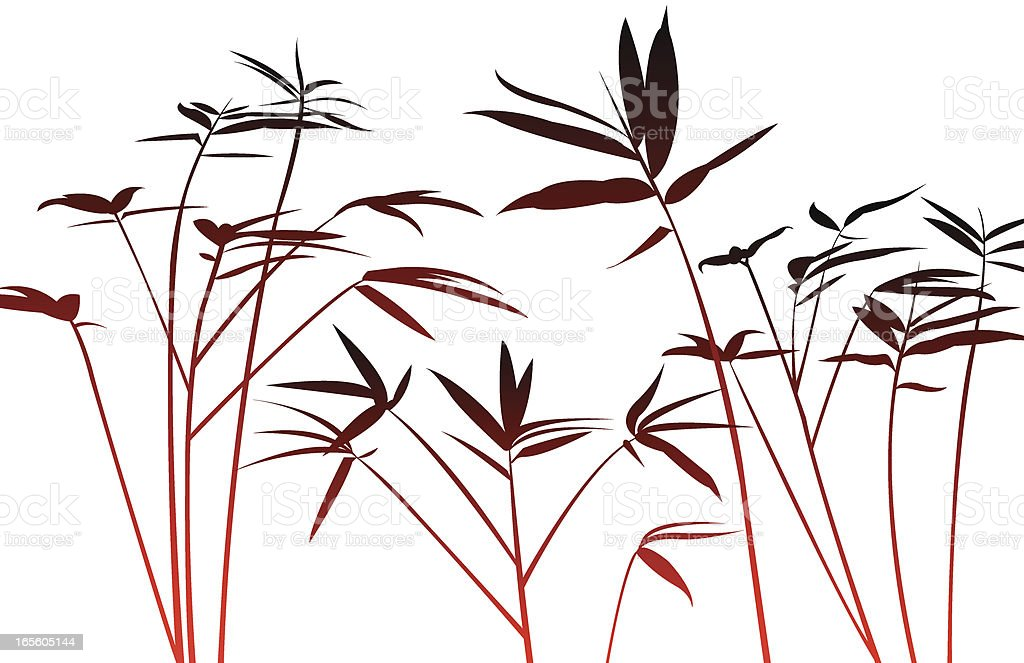 Bamboo Plant vector art illustration