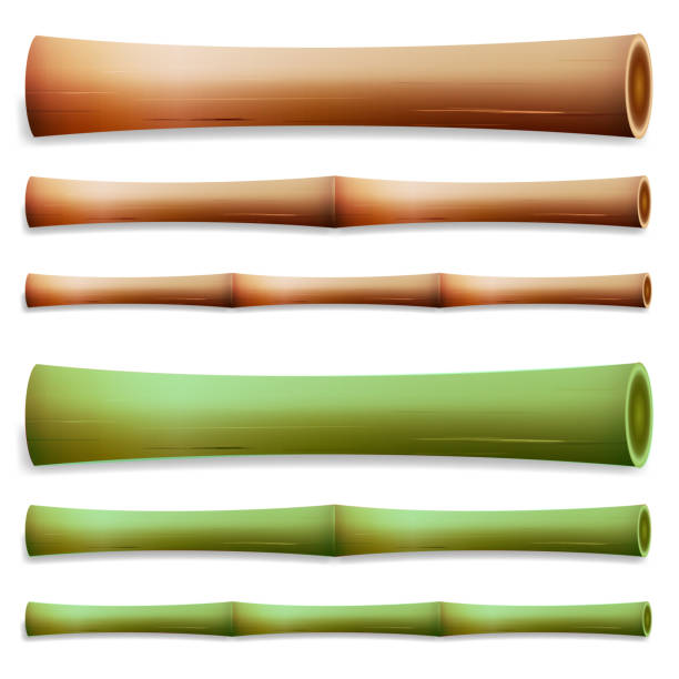 Brown Bamboo Stick ~ Royalty free bamboo stick clip art vector images