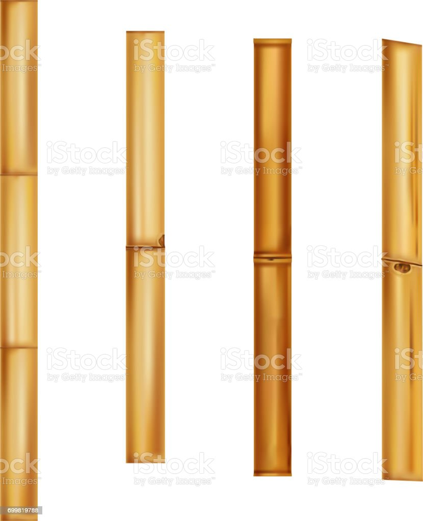 Bamboo stems Realistic brown sticks. Vector Illustration. vector art illustration