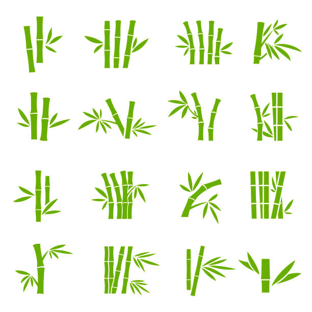 illustrazioni stock, clip art, cartoni animati e icone di tendenza di bamboo tree branches color vector icons set - illustrazioni di canna da zucchero