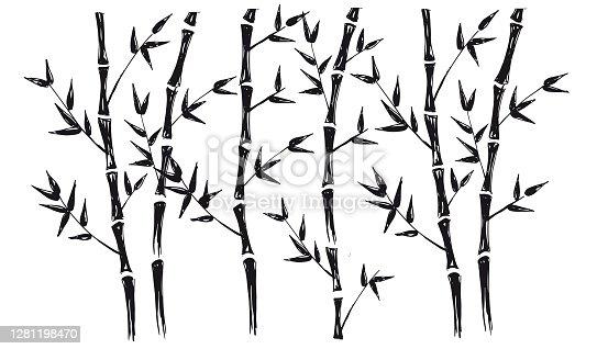 Bamboo tree. Hand drawn illustrations.