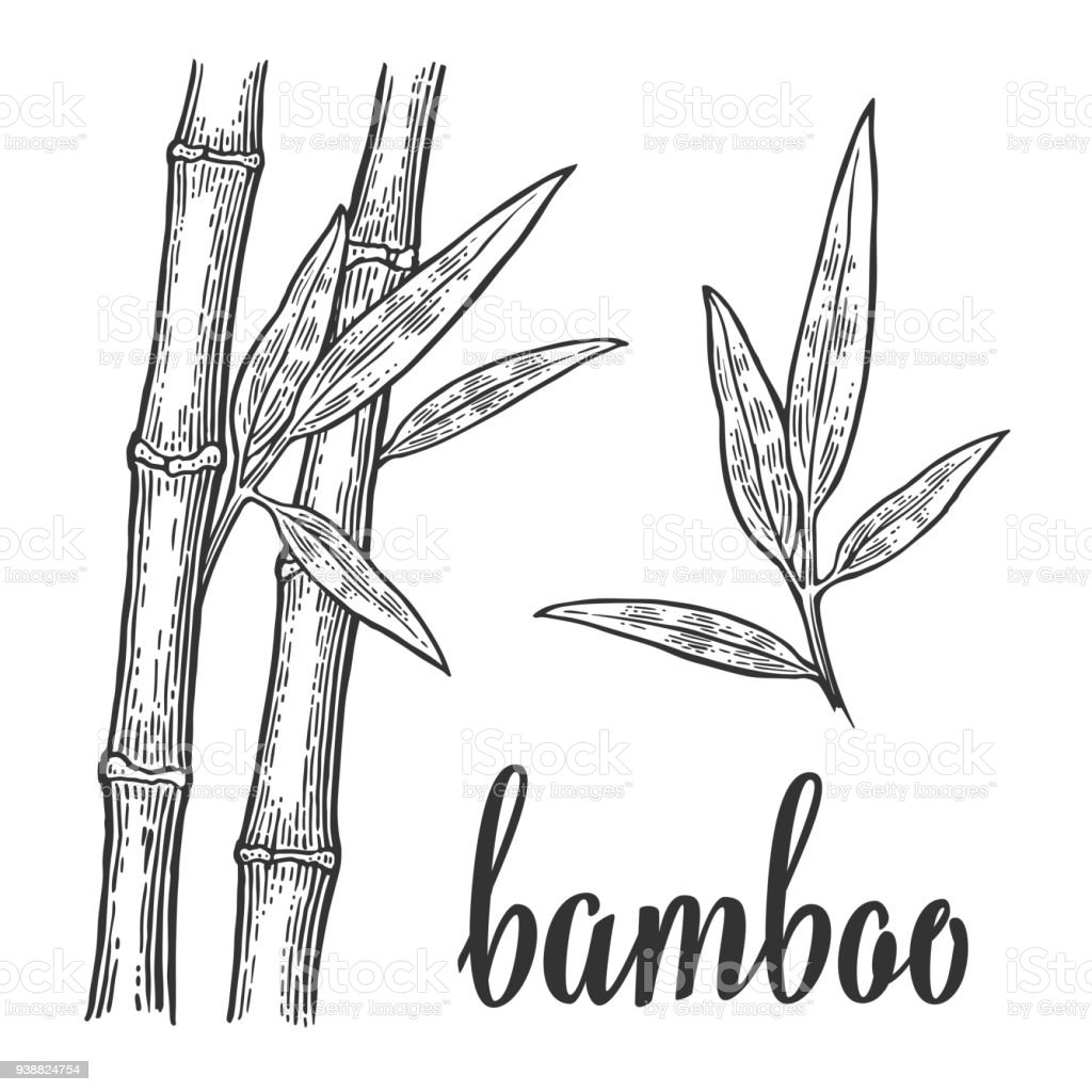Bamboo trees white silhouettes and black outline on red circle. Hand drawn design element. Vintage vector engraving illustration for logotype, poster, web. Isolated on white background vector art illustration