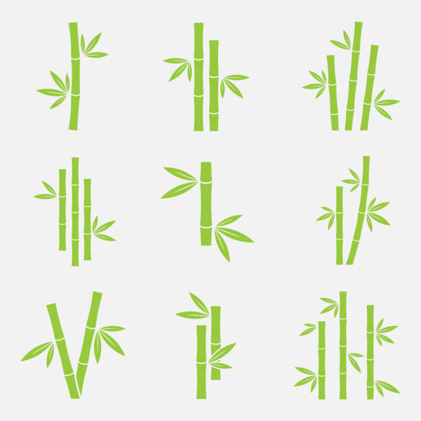 Bamboo vector icon Bamboo vector icon set isolated on a white background. Silhouettes of bamboo trunks, stems, or trees with leaves. Green symbols tropical bamboo. bamboo material stock illustrations