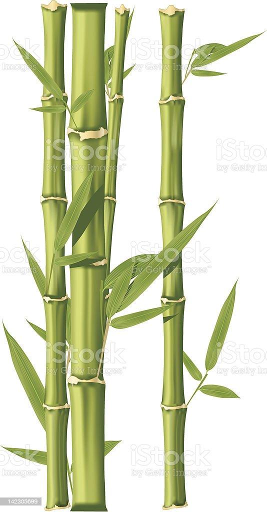 Bambus Stock Vektor Art Und Mehr Bilder Von Bambus Graspflanze