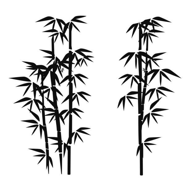 bamboo vector art illustration