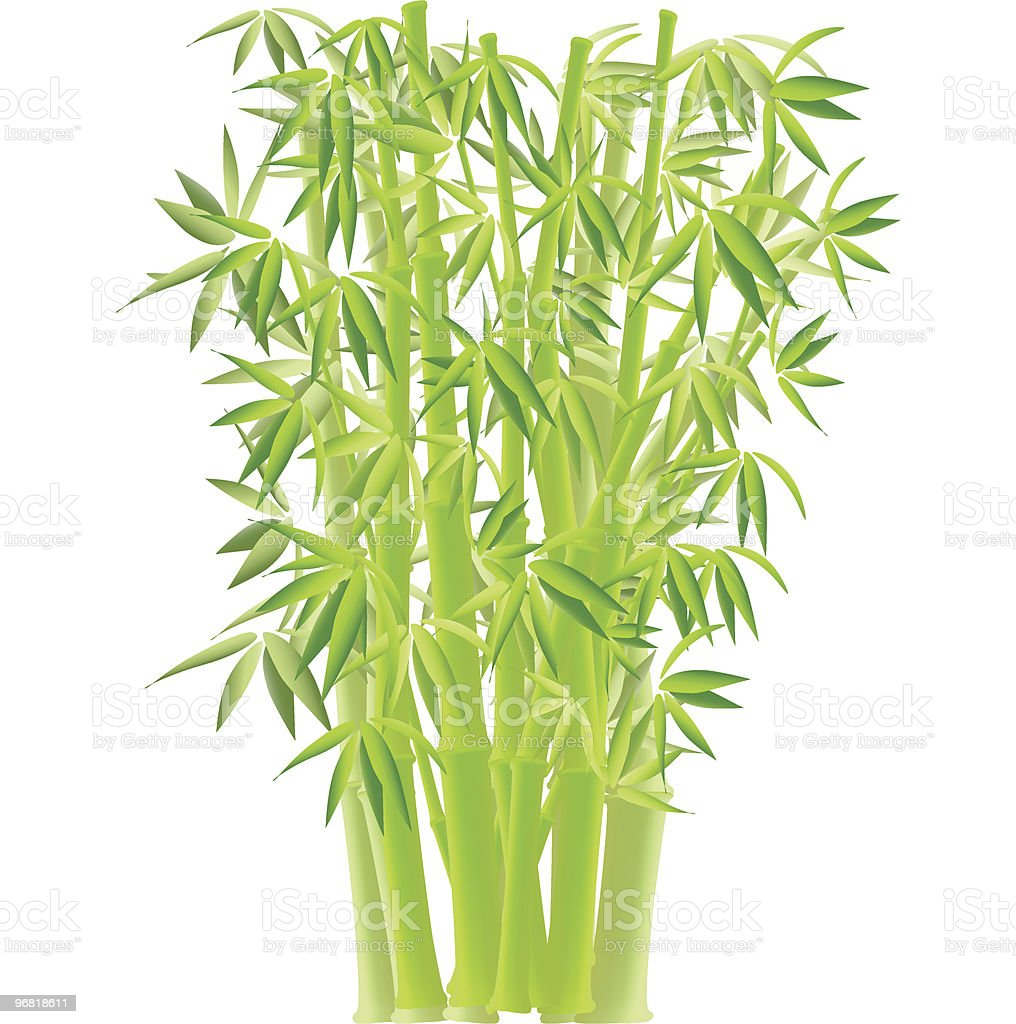 bamboo vector art illustration