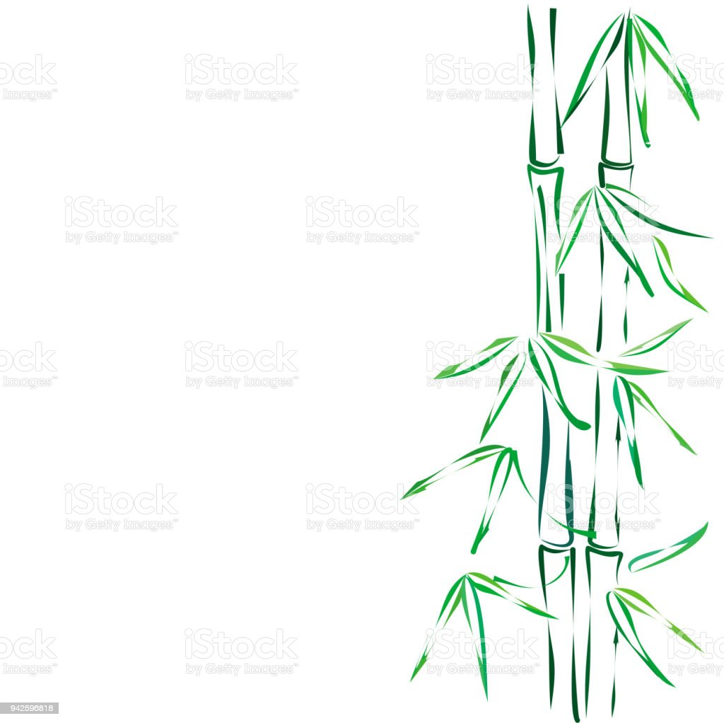 Bamboo, vector sketch. vector art illustration