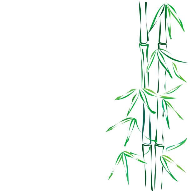 竹、ベクター スケッチ。 - 七夕点のイラスト素材/クリップアート素材/マンガ素材/アイコン素材