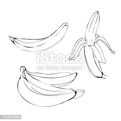 Banana fruit illustration in line art black color isolated on white background in vector
