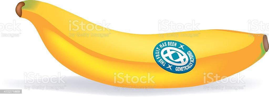 banana, genetically-modified royalty-free stock vector art