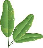 Vector Banana Leaf