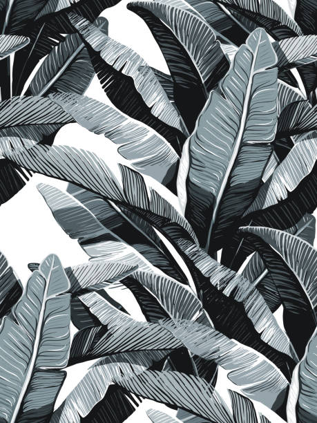 Banana Leaves. Seamless tropical pattern. Black and white design. Monochrome repearing pattern. Perfect contrast minimalistic pattern. banana patterns stock illustrations
