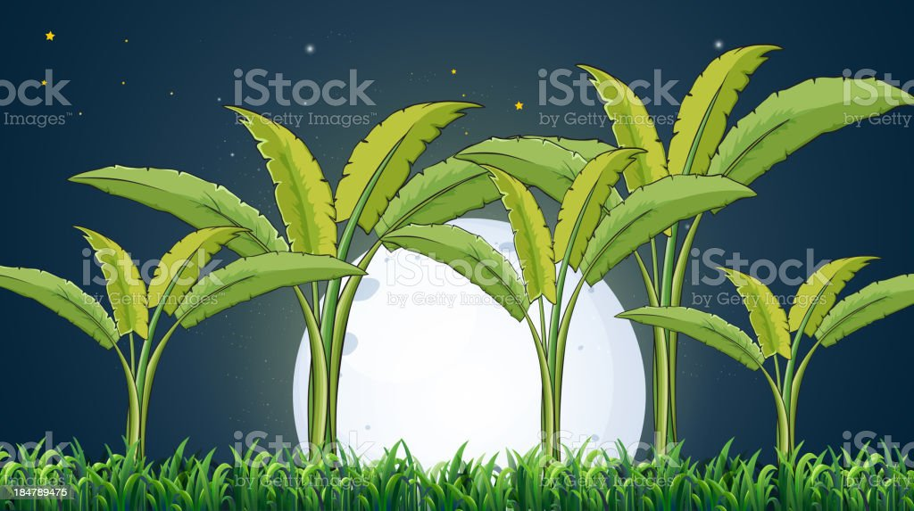 Bananenplantage unter der weißen fullmoon – Vektorgrafik
