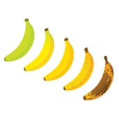Banana ripeness chart vector illustration. Set of different color bananas, green underripe to brown over ripe.