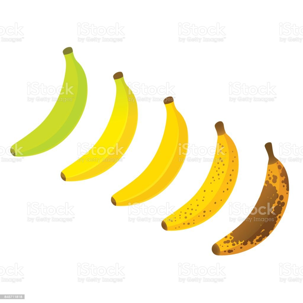 Banana ripeness chart vector art illustration