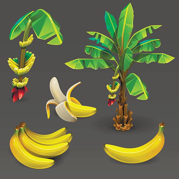 Banana set 2 vector art illustration