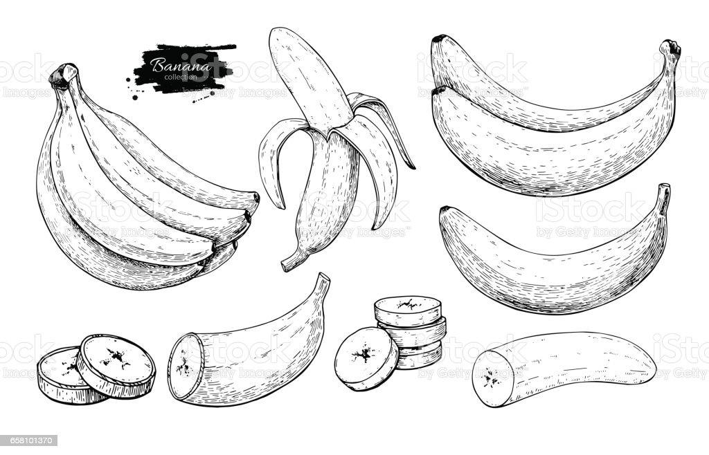 Ilustración de Dibujo Vectorial Plátano Set Racimo Dibujado Mano ...
