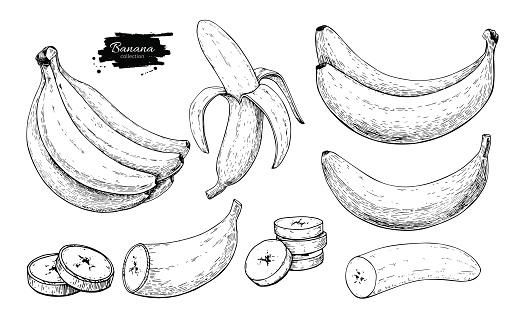 Banana set vector drawing. Isolated hand drawn bunch, peel banana and sliced