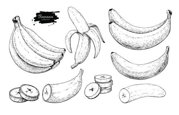 illustrazioni stock, clip art, cartoni animati e icone di tendenza di banana set vector drawing. isolated hand drawn bunch, peel banana and sliced - banana