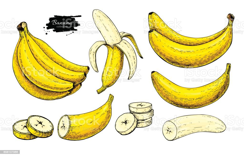 Banana set vector drawing. Isolated hand drawn bunch, peel banana and sliced vector art illustration