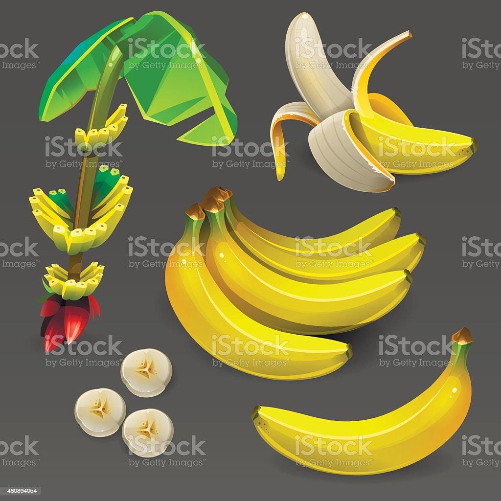 Bananen-set – Vektorgrafik
