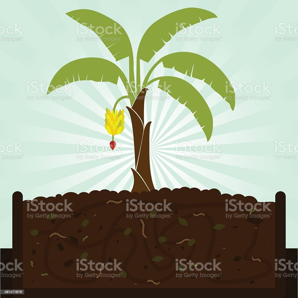 Banana tree and compost vector art illustration
