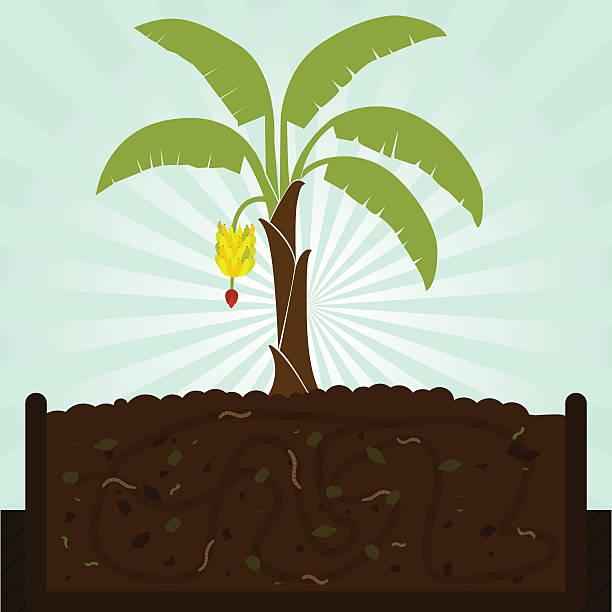 Bananenstaude und Kompost – Vektorgrafik