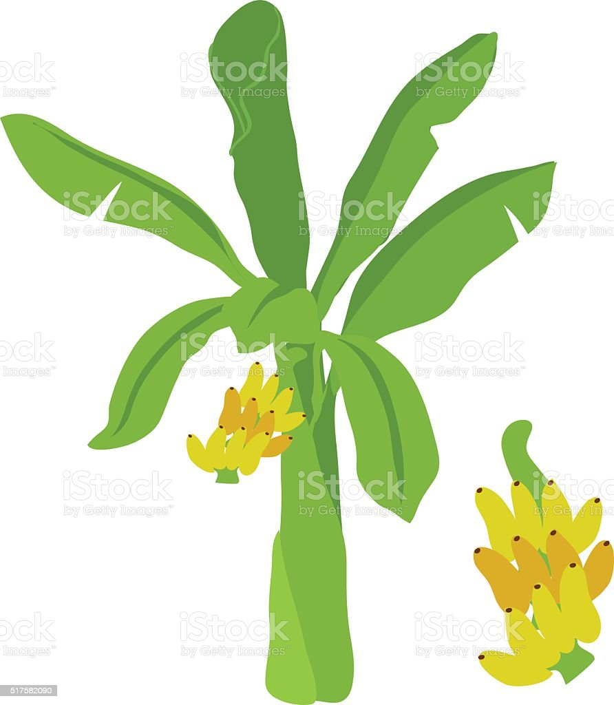 banana tree vector cartoon vector art illustration
