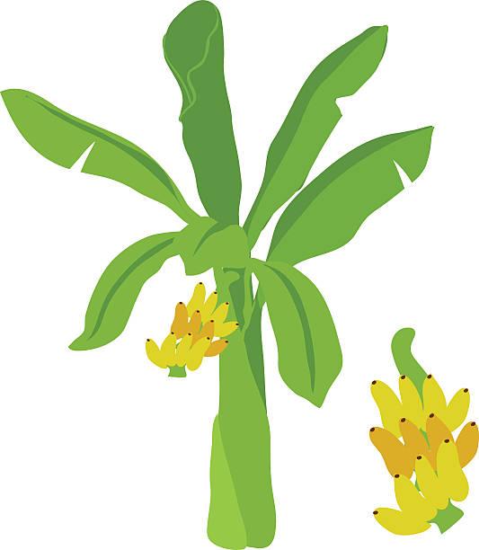 Bananenstaude Vektor-Comic – Vektorgrafik