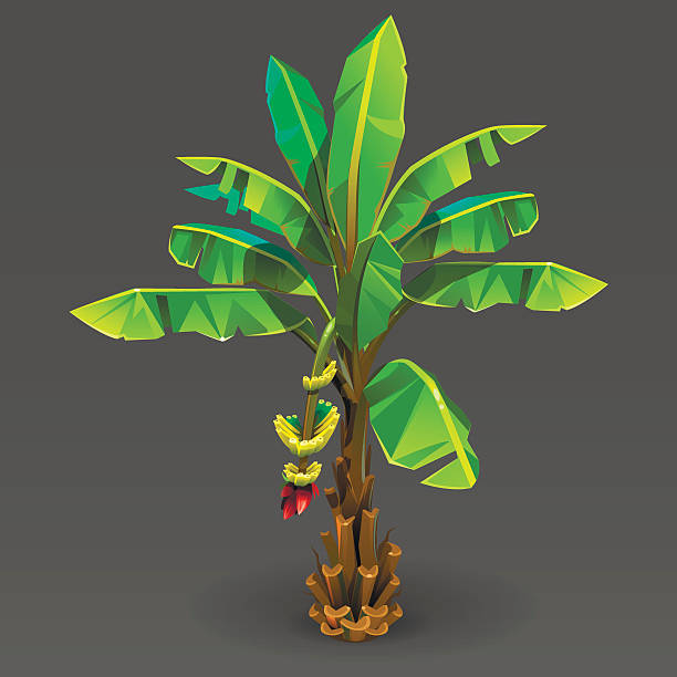 Banana tree – Vektorgrafik