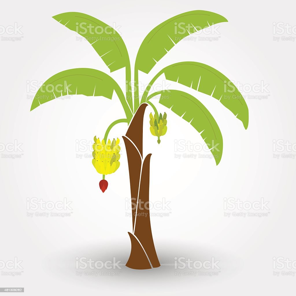 Banana Tree Stock Illustration Download Image Now Istock
