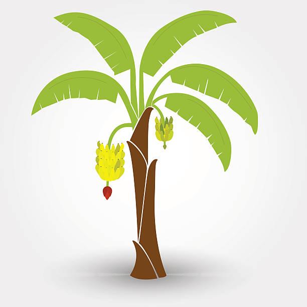 Banana tree vector art illustration