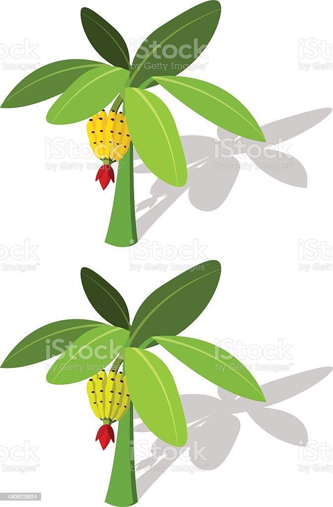 Bananenstaude mit Banane Früchte – Vektorgrafik