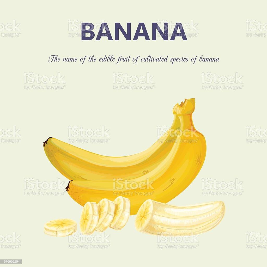 Banana  - ilustração de arte em vetor