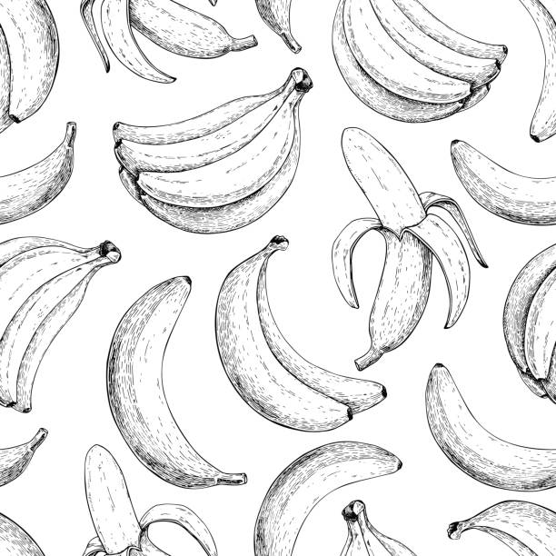 Banana vector seamless pattern. Isolated hand drawn bunch and  peel banana  Summer fruit engraved style Banana vector seamless pattern. Isolated hand drawn bunch and  peel banana  Summer fruit engraved style illustration. Detailed vegetarian food. Great for label, poster, print banana drawings stock illustrations