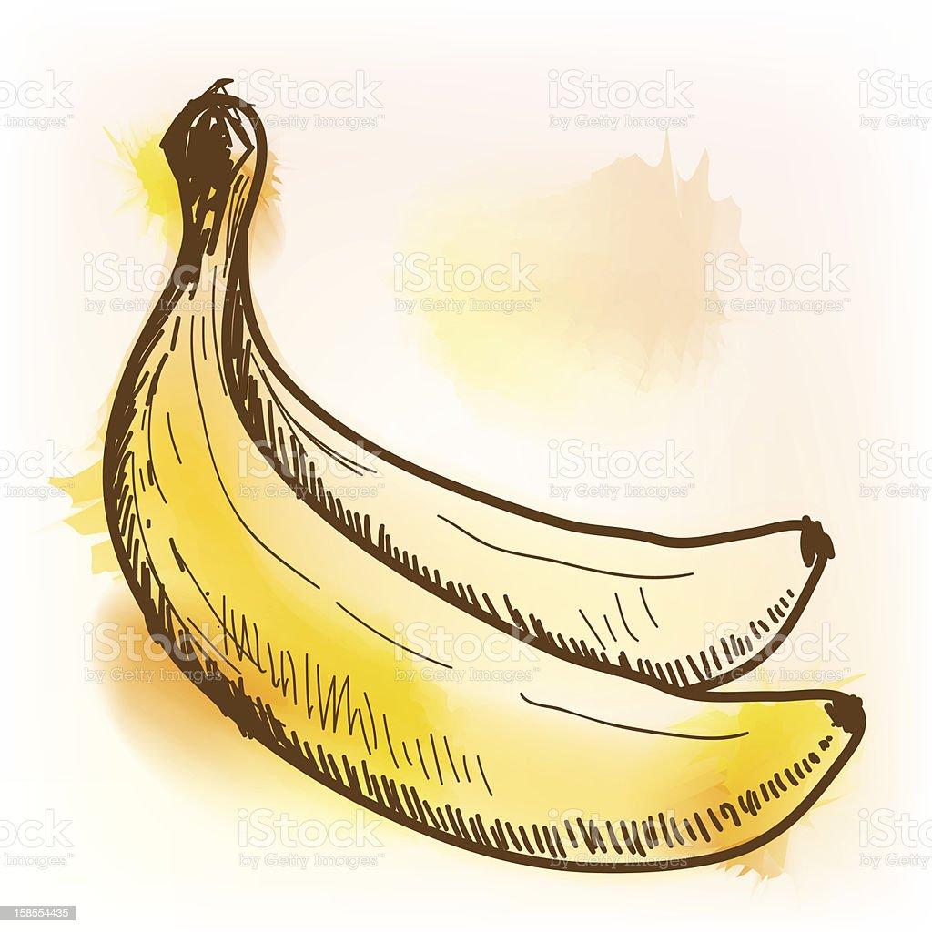 바나나, 수채화 royalty-free 바나나 수채화 0명에 대한 스톡 벡터 아트 및 기타 이미지