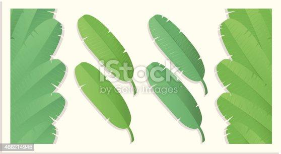 istock Bananaleafs (varios). 466214945