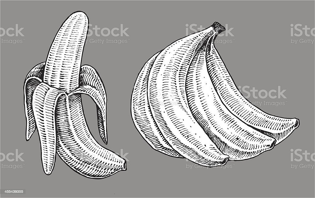 Bananas - Fruit royalty-free stock vector art
