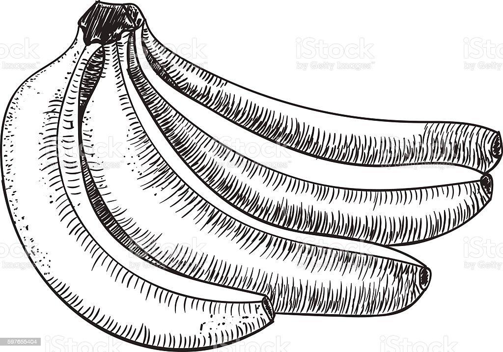 Banana sketch drawing
