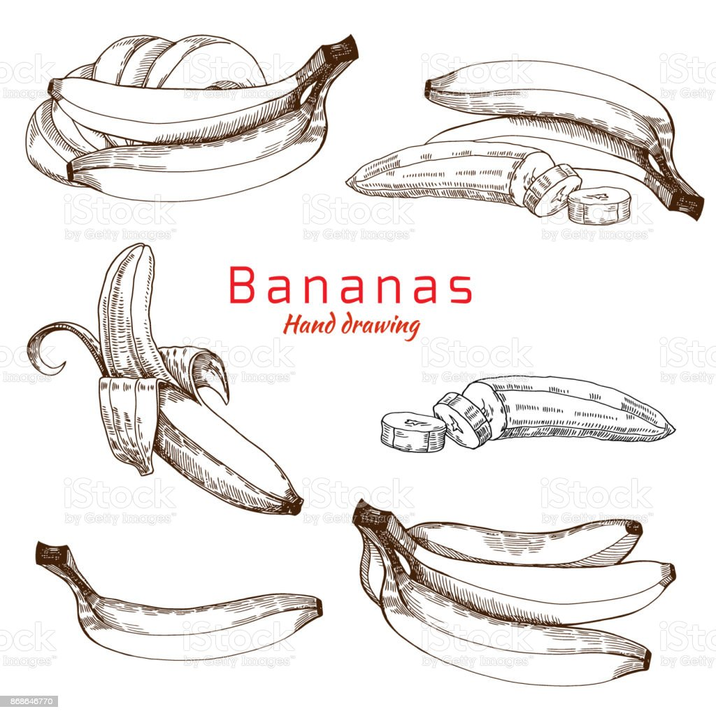 Bananas set, vector hand drawing vector art illustration