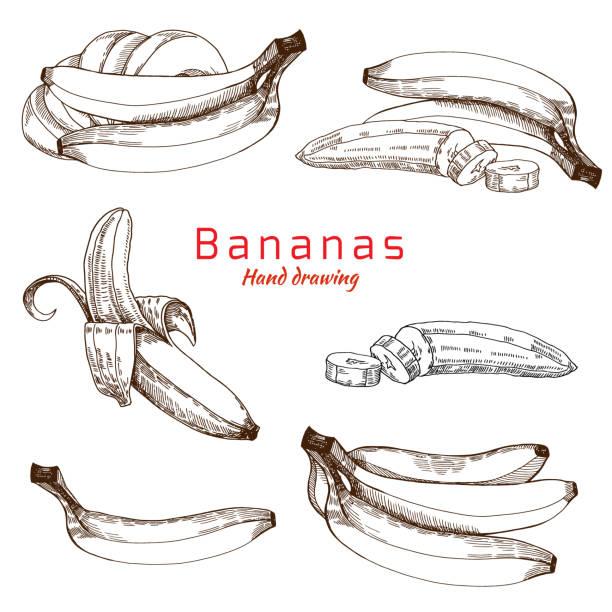 Bananas set, vector hand drawing Bananas set, vector hand drawing banana drawings stock illustrations