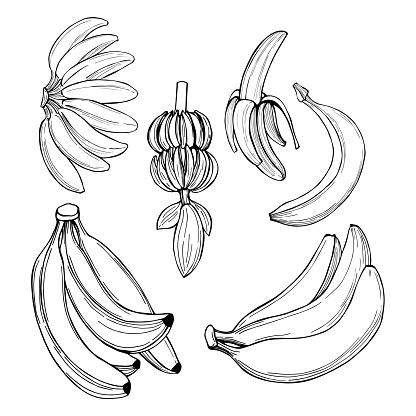 Hand-drawn fruits. Bananas. Vector sketch  illustration.